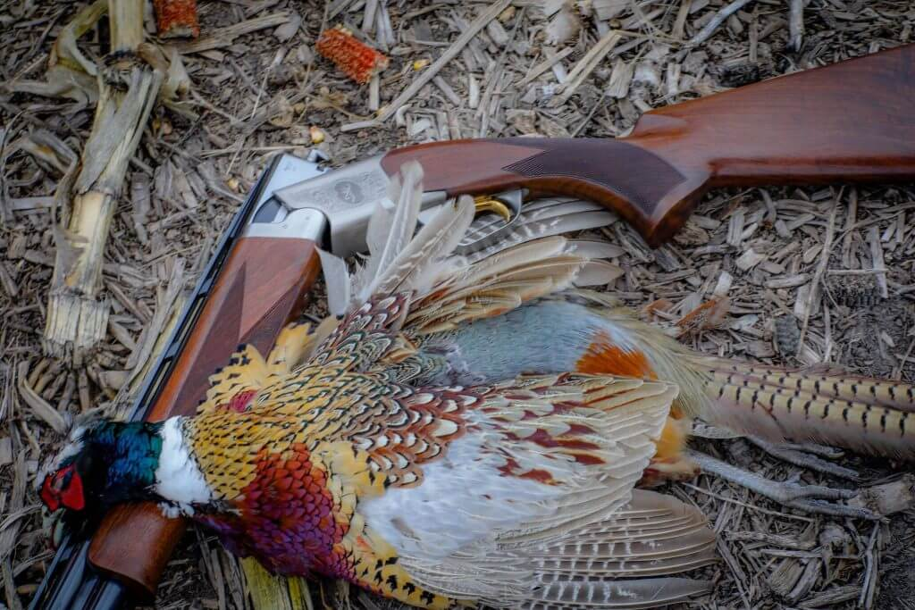 South Dakota Pheasant Hunting Lodge and Outfitter | Aberdeen, SD