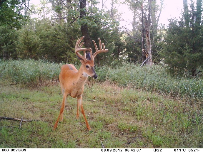 Picture of Trail Cam Photos