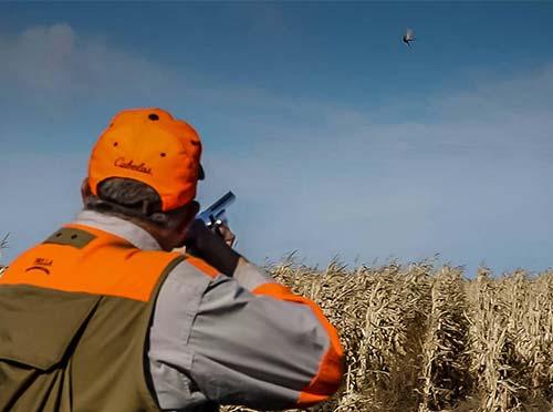 South Dakota Pheasant Hunt in Cornfield