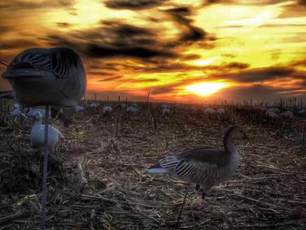 Picture of Waterfowl Hunting Photos