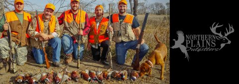 Wild South Dakota Pheasants